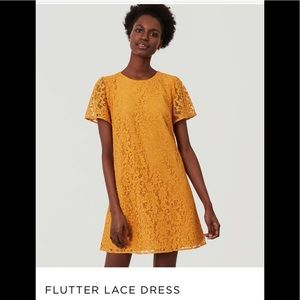 LOFT Flutter Lace Dress
